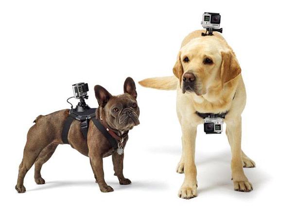 Pas za psa GoFetch